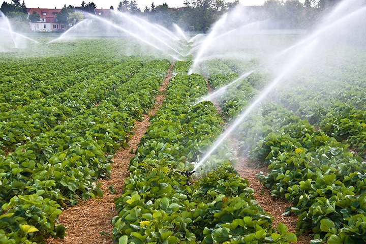 Vacuum Priming for Agriculture